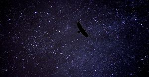 Eagle at night