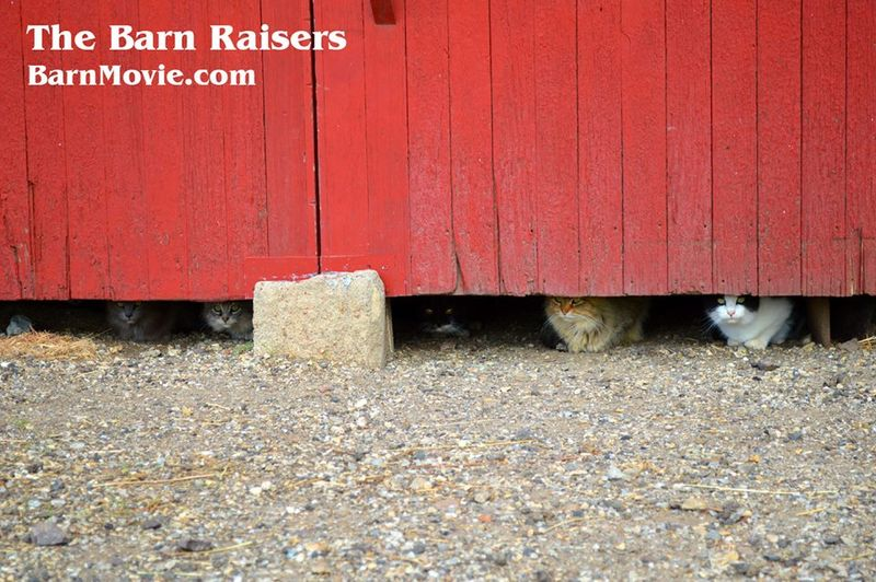 Mousers at Hahn barn